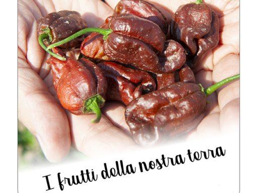 Un parto al naturale: la pianta di peperoncino e la nascita dei suoi frutti